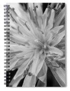 Wildflower 5 Black N White Spiral Notebook
