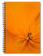 Wildflower Art Poppy Flower 6 Poppies Artwork Prints Cards Spiral Notebook
