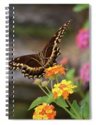 Wildflower Swallowtail Spiral Notebook