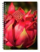 Wildflower Waratah Spiral Notebook