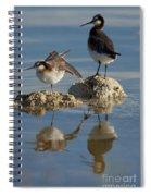 Wildons Phalaropes Spiral Notebook