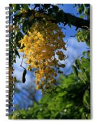Wilhelmina Tenney Rainbow Shower Tree Makawao Maui Flowering Trees Of Hawaii Spiral Notebook