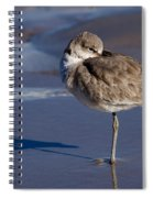 Willet Resting At The Beach Spiral Notebook