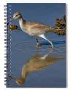 Willet Searching For Food In An Oyster Bed Spiral Notebook