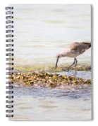 Willet Set 4 Of 4 By Darrell Hutto Spiral Notebook