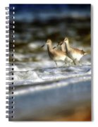 Willets In The Waves Spiral Notebook