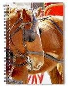 Williamsburg Carriage Horse Spiral Notebook