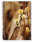 Willow Catkins Spiral Notebook
