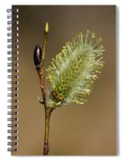 Willow Spring Spiral Notebook