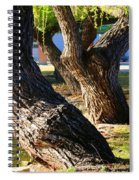 Willow Trees Spiral Notebook
