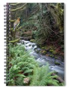 Wilson Creek #14 With Added Cedar Waxwing Spiral Notebook