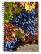 Wine Grapes Napa Valley Spiral Notebook