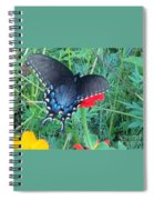 Wing Spread Butterfly Spiral Notebook