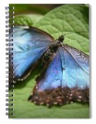 Wingdrops Spiral Notebook