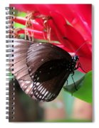Wings Of Brown - Butterfly Spiral Notebook