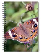 Wings Of Wonder - Common Buckeye Butterfly Spiral Notebook
