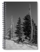 Winter Alpine Trees, Mount Rainier National Park, Washington, 2016 Spiral Notebook