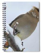 Winter Berry Treat Spiral Notebook