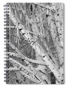 Icy Winter Birch Tree  Spiral Notebook