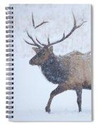 Winter Bull Spiral Notebook