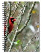 Winter Cardinal Sits On Tree Branch Spiral Notebook