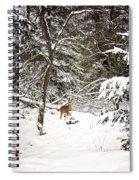 Winter Doe In The Upper Peninsula Spiral Notebook