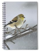 Winter Finch 2010 Spiral Notebook