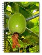 Winter Melon In Garden 2 Spiral Notebook
