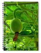 Winter Melon In Garden 3 Spiral Notebook
