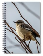 Winter Mockingbird Spiral Notebook