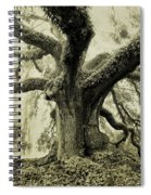 Winter Oak Spiral Notebook
