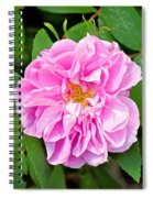 Winter Park Rose Spiral Notebook