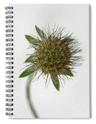 Winter Pin Cushion Plant Spiral Notebook