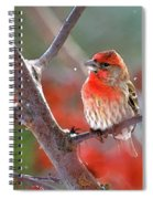 Winter Red Spiral Notebook