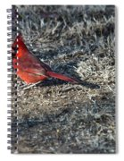 Winter Redbird Spiral Notebook