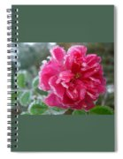 Winter Rose Spiral Notebook