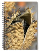 Winter Seed Pod Spiral Notebook