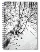 Winter Shrubs, New Hampshire Spiral Notebook
