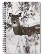 Winter Slumber Spiral Notebook