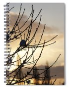 Winter Sun 3 Spiral Notebook
