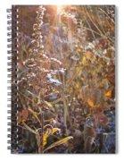 Winter Sun Spiral Notebook