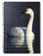 Winter Swan Spiral Notebook
