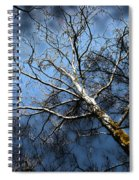 Winter Sycamore Spiral Notebook
