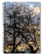 Winter Trees At Sunset Spiral Notebook
