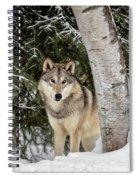Winter Visitor Spiral Notebook