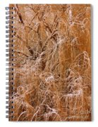 Winter Willow Branches Spiral Notebook