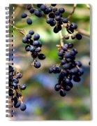 Winterberries I Spiral Notebook