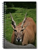 Wise Guy Spiral Notebook