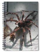 Wolf Spider Sunlight Spiral Notebook