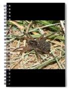 Wolf Spider With Babies Spiral Notebook